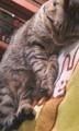[オフ会][猫]200901(のいつか)ねこにもふもふされる会