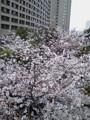 [風景][花]飯田橋駅前