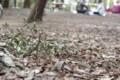 [風景][足下]井の頭公園