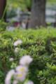 [風景][花]