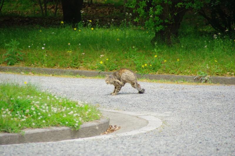 [風景][京都][猫]
