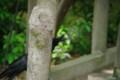 [風景][京都][鳥]
