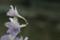 [花][青梅]