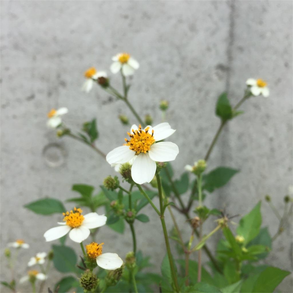 f:id:nejimakiya:20170423205547j:image