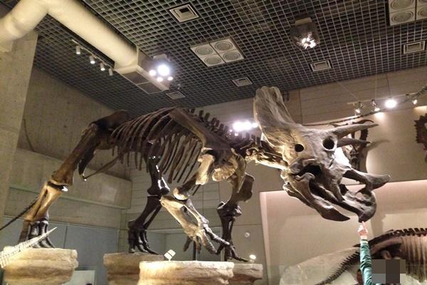 トリケラトプス 化石