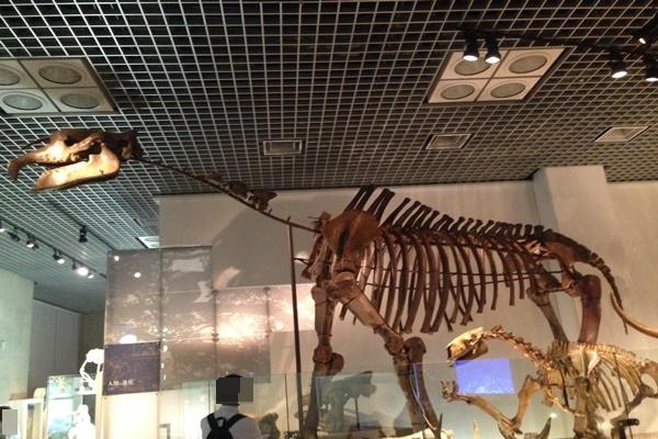 哺乳類 化石