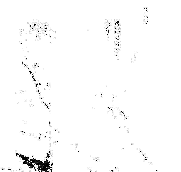 漫画『素足のメテオライト』ダルミル
