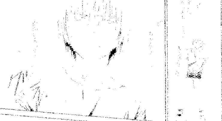 f:id:nek654:20170701125634p:plain