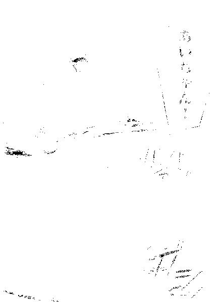 f:id:nek654:20170725212153p:plain
