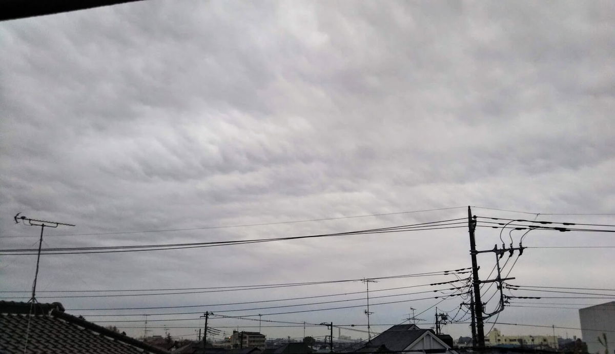 f:id:neko-gurashi:20210405063027j:plain