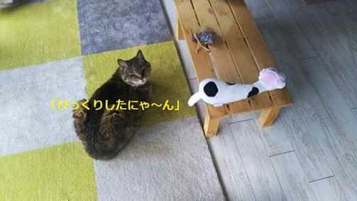 f:id:neko-hai:20180618174459j:plain
