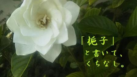 f:id:neko-hai:20180627190140j:plain