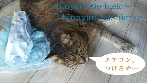 f:id:neko-hai:20180809132523j:plain