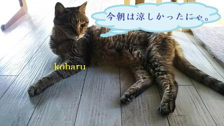f:id:neko-hai:20180819082231j:plain