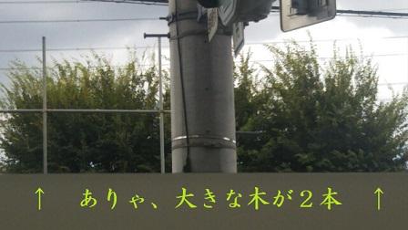 f:id:neko-hai:20180819084710j:plain