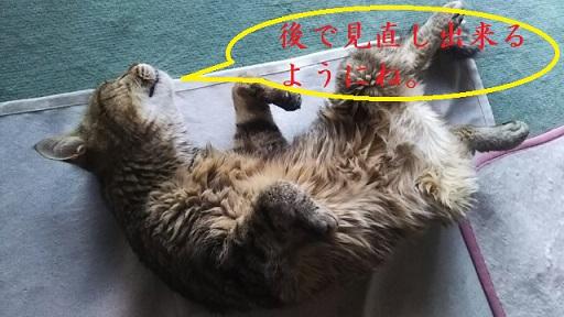 f:id:neko-hai:20180828200225j:plain