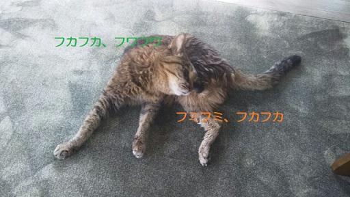 f:id:neko-hai:20181012201843j:plain