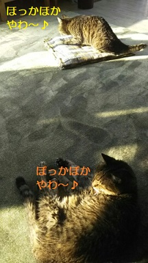 f:id:neko-hai:20181019172048j:plain