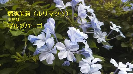 f:id:neko-hai:20181021085450j:plain