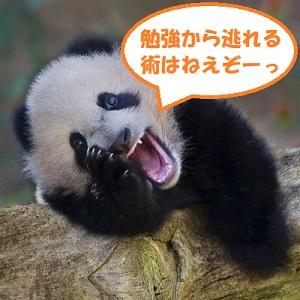 f:id:neko-hai:20181115122648j:plain