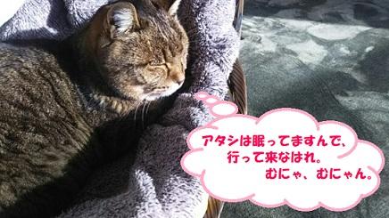f:id:neko-hai:20181216105921j:plain