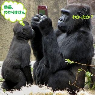 f:id:neko-hai:20181218160429j:plain