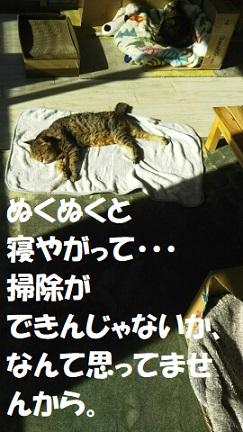 f:id:neko-hai:20181231235901j:plain