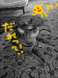 f:id:neko-hai:20190101001522j:plain