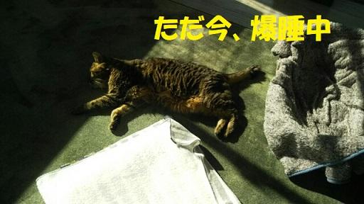 f:id:neko-hai:20190104171419j:plain
