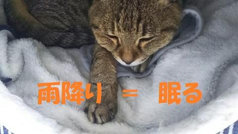 f:id:neko-hai:20190418203143j:plain