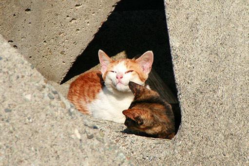 初島の猫。