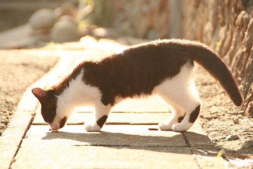 田代島の白黒猫たち。