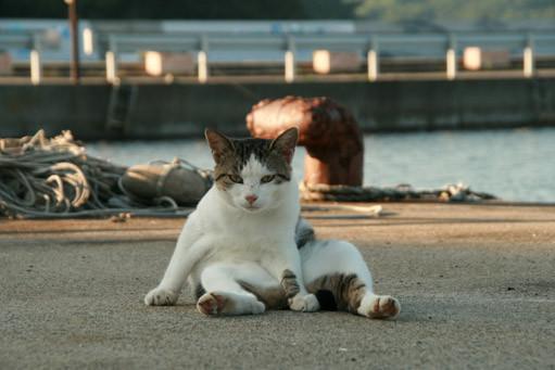 田代島の猫。