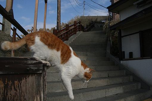 f:id:neko-nikki:20100123102707j:image