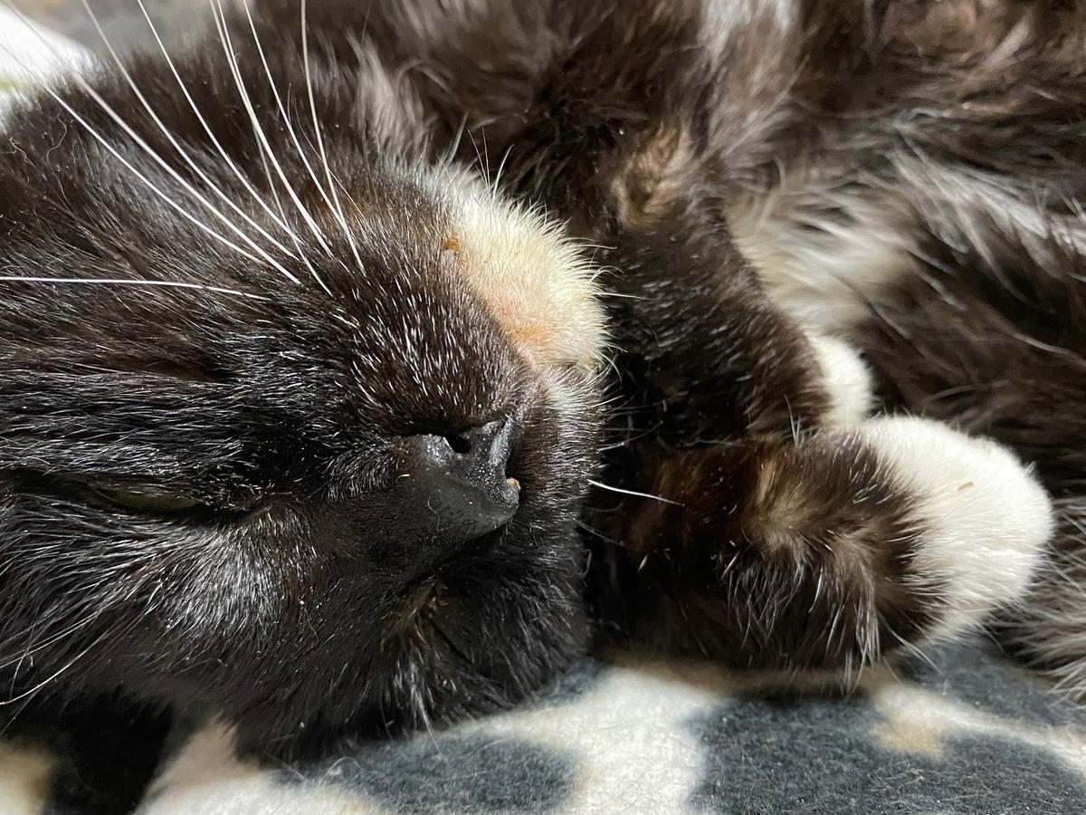ネコのお告げ_猫好き占い師_猫好きさんと繫がりたい_高齢猫との生活_腎不全_20210219