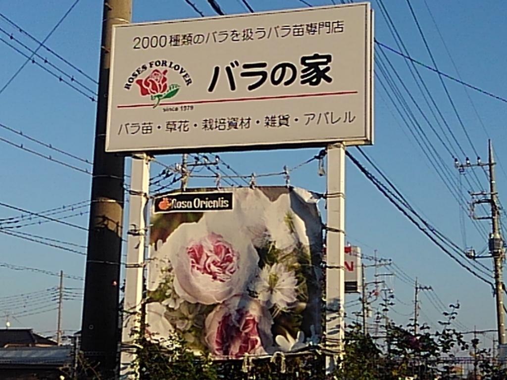 f:id:neko-tokidoki-hana:20181207193312j:plain