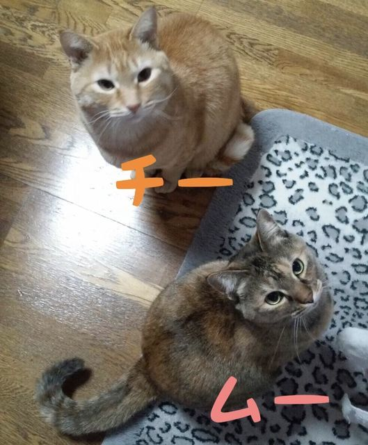 f:id:neko_mama_neko:20181205214155j:plain
