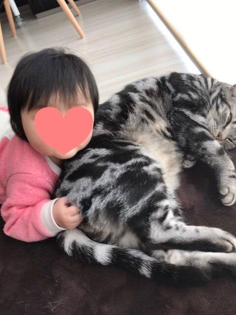 f:id:neko_mama_neko:20190124202053j:plain
