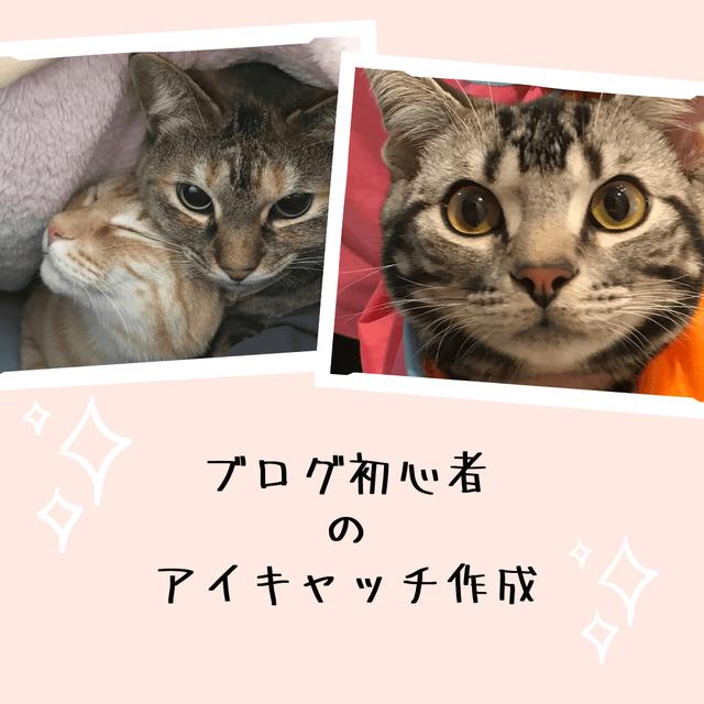 f:id:neko_mama_neko:20190430194806p:plain