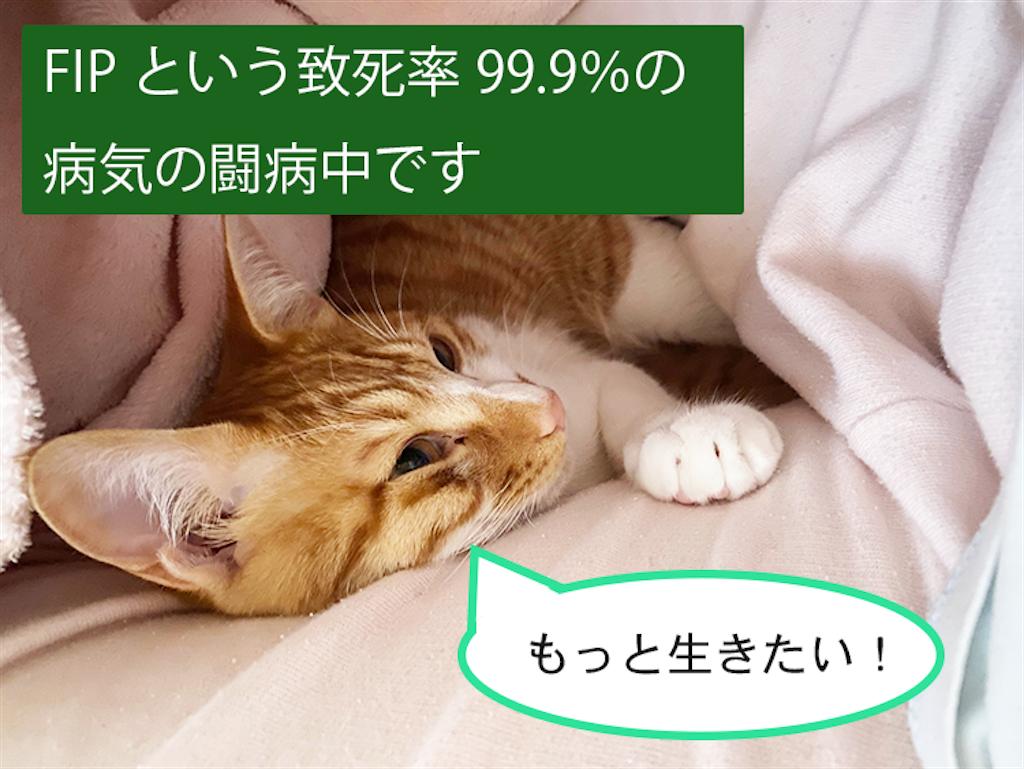 f:id:neko_timo:20210329220653p:image