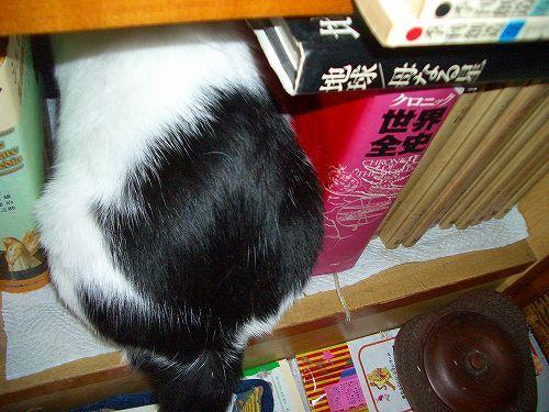猫つき書棚