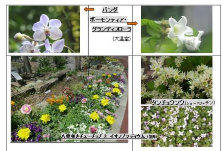 f:id:nekoatama:20120422001947j:image