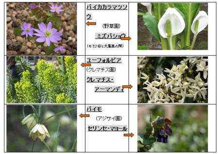 f:id:nekoatama:20120422002134j:image