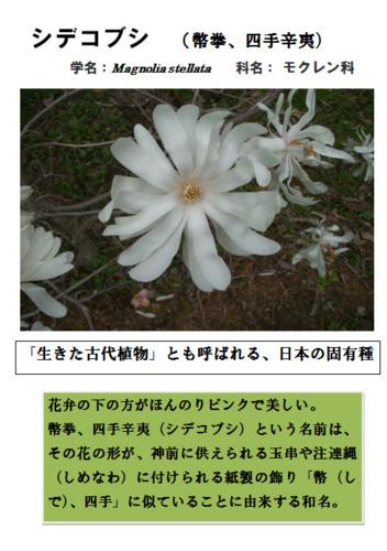 f:id:nekoatama:20140329094251j:image