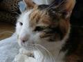 [猫][ハイク]うちの猫