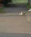 [猫][ハイク]路地写真