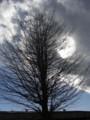 [ハイク]木写真