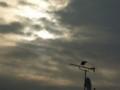 [雲][鳥]朝空