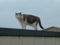 [猫][ハイク]猫