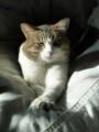 [猫][ハイク]猫の日